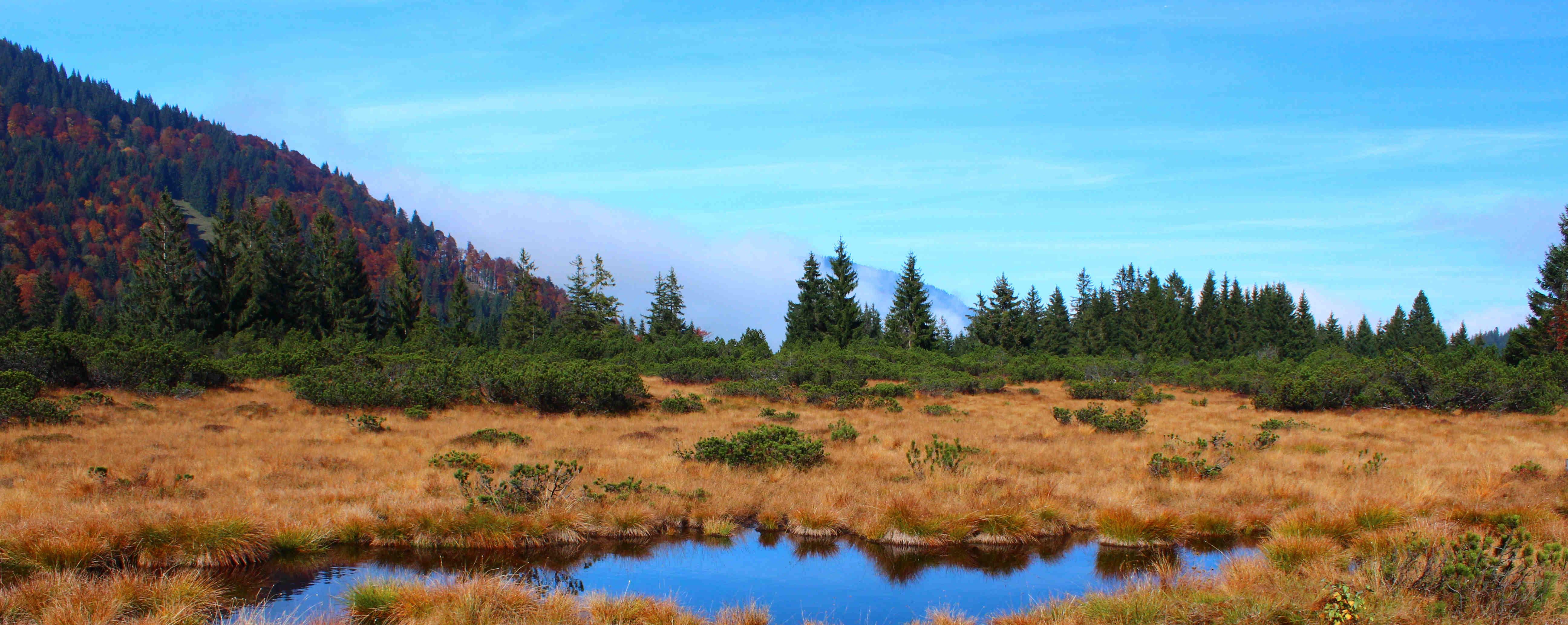 Auf dem Bild ist ein Moorgebiet zu erkennen, in welchem Lycopodiella inundata wächst.