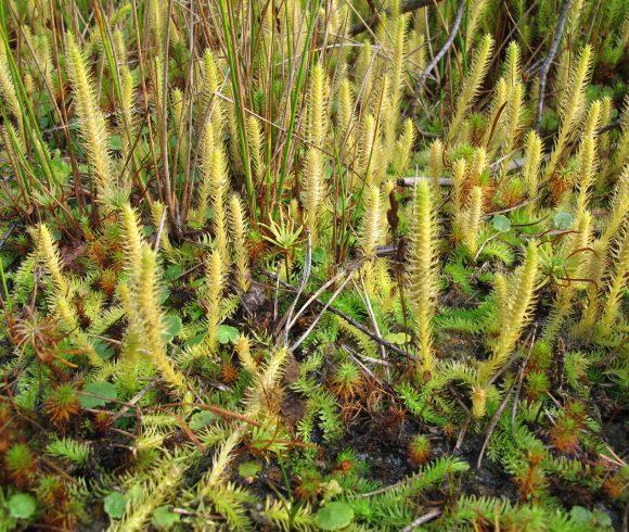 Pflanzen im Fokus